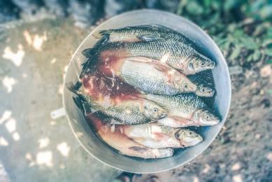 Informacja dotycząca postępowania z żywymi rybami przeznaczonymi do sprzedaży