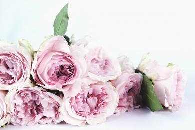 Najserdeczniejsze życzenia z okazji Dnia Kobiet!