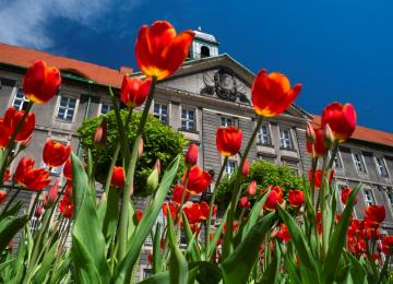 Wiosenne prace w bytomskich parkach i skwerach